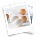 About Egg